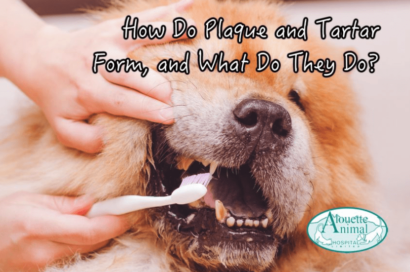 How Do Plaque and Tartar Form, and What Do They Do?