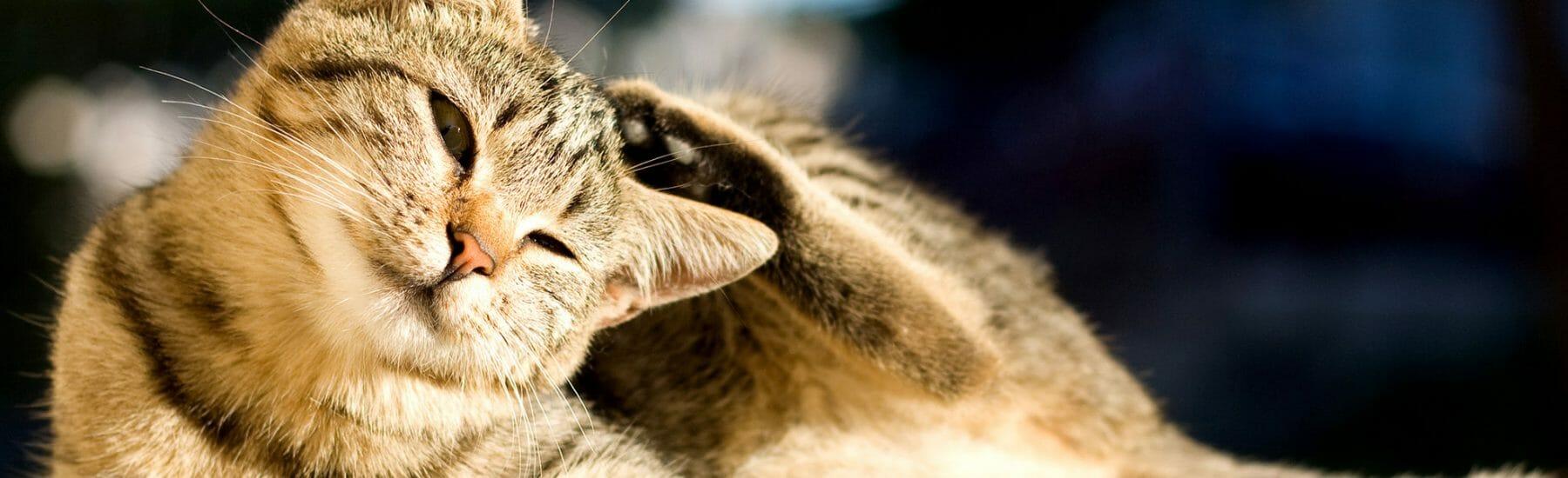 Cat Flea Control