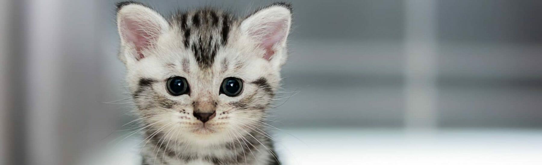 Cat General