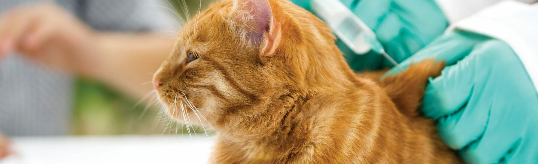 Cat Vaccionations