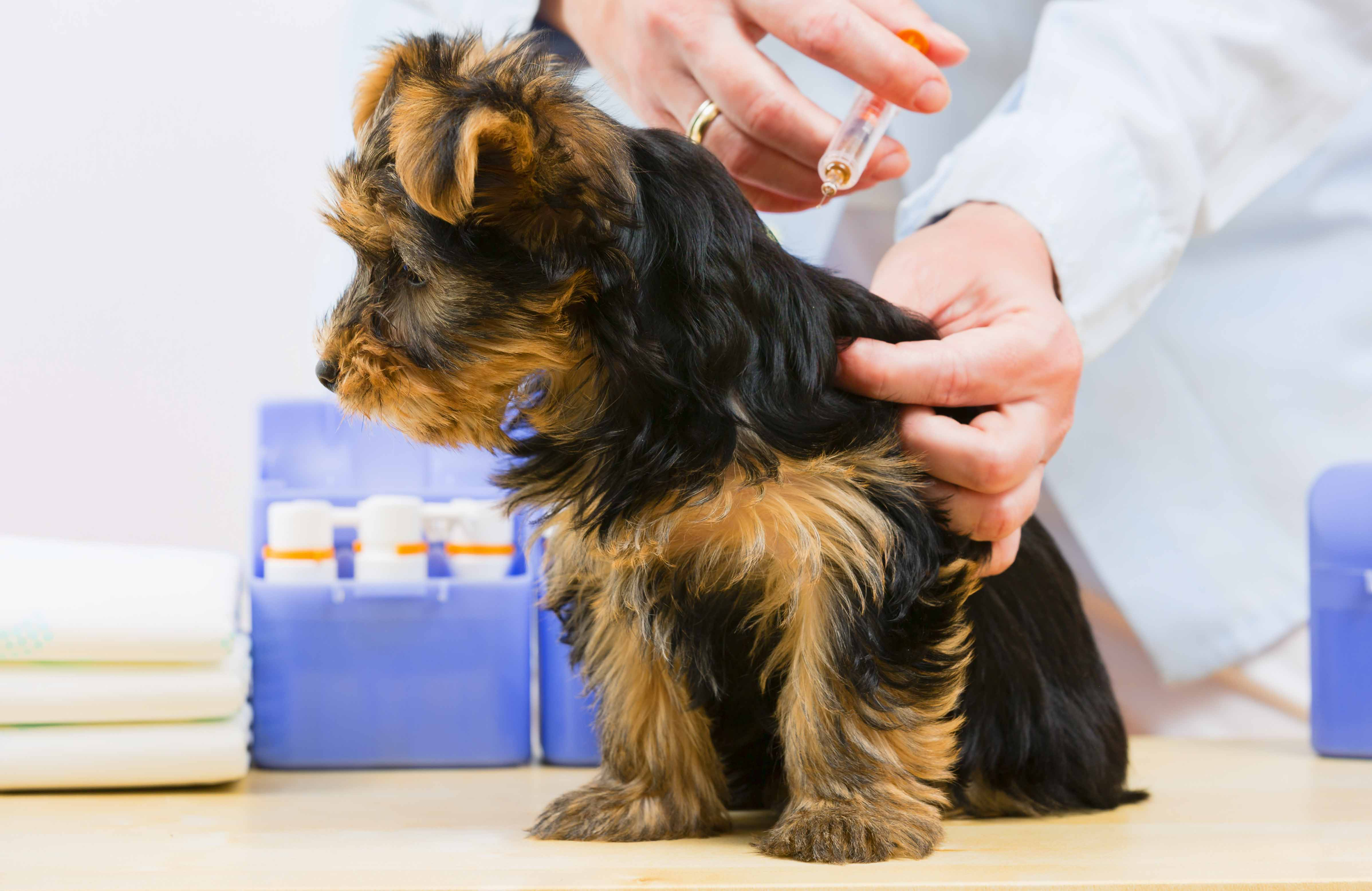 Dog Vaccinations Alouette Animal Hospital